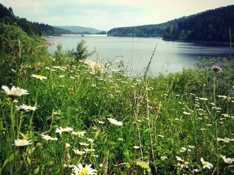 Blick auf die Schwarzenbachtalsperre und Blumenwiesen