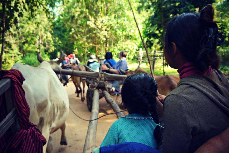 Fahrt mit dem Ochsenkarren in Chambok