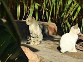 Katzen im Bahia Palast genießen die Morgensonne