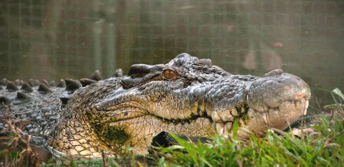 This Way Out: Waaaay Out with crocodiles in Australia's Kakadu National  Park • EscapeHatchDallasEscapeHatchDallas