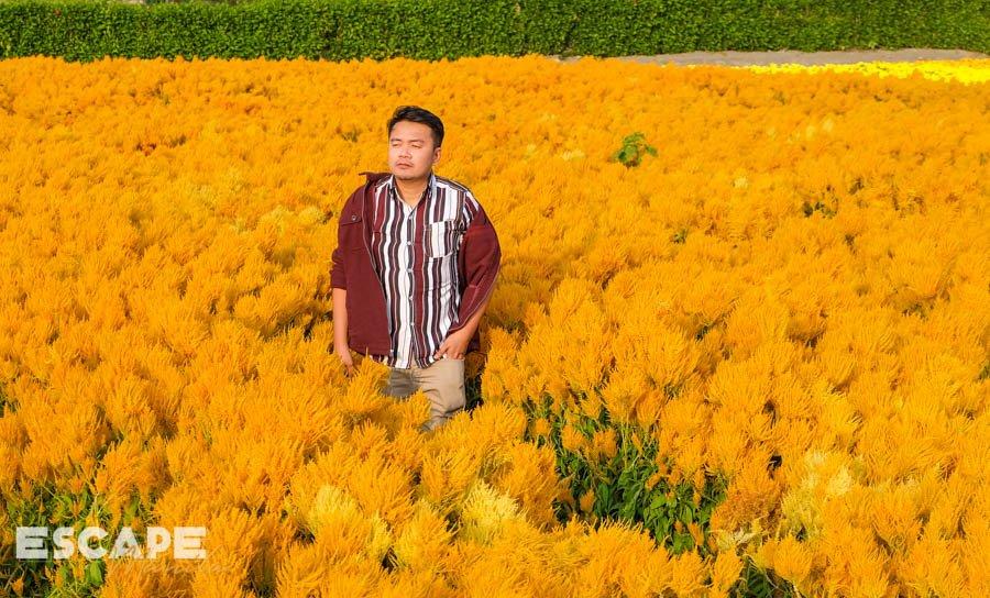 Houli Flower Farm in Taichung