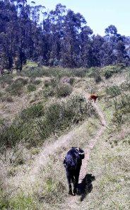 Tramo 2 - inicia en un bosque de eucalipto (muy refrescante)