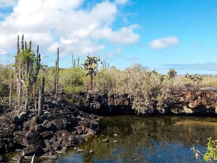pozas lava isabela cactus