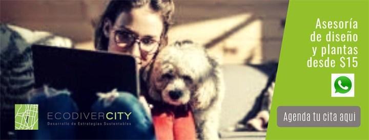 Ecodivercity asesoria reverdece tu casa