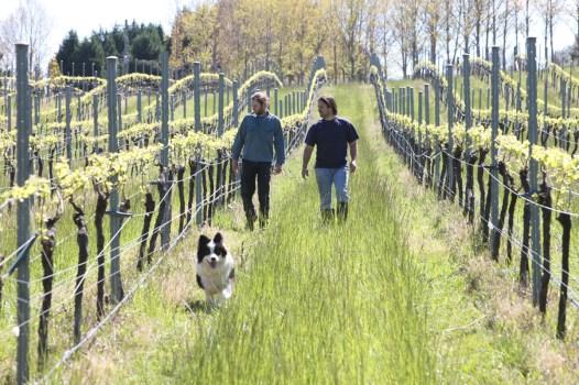 winemakers at tractorless vineyard