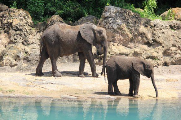Reglas de etiqueta para viajeros - Elefantes