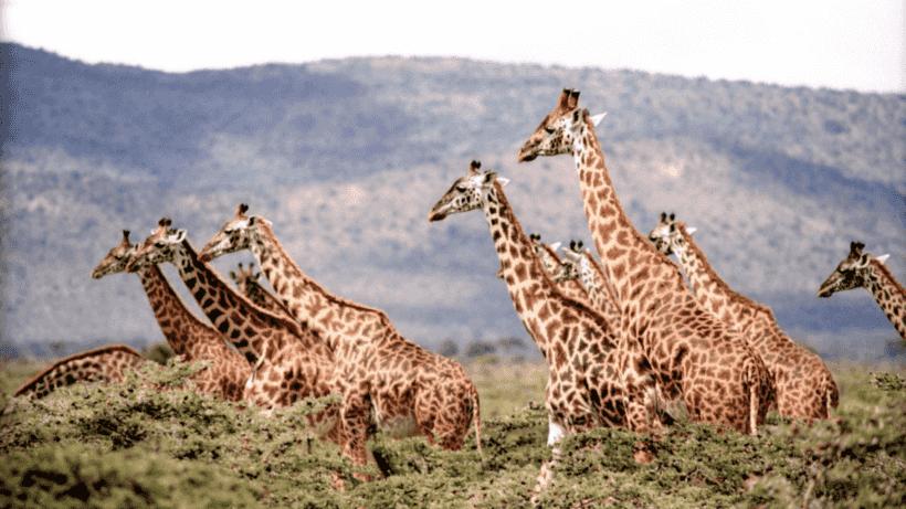 ▷ 10 consejos para ser un viajero responsable con los animales salvajes este 2020