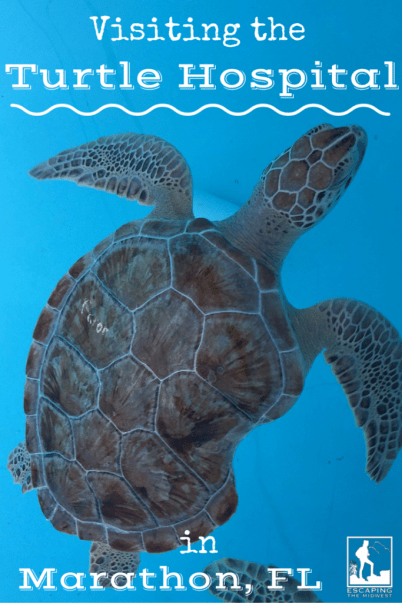 Sea Turtles Hospital Review