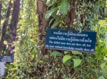 Chiang Mai-1116