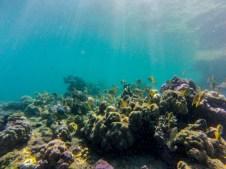Marine Life around El Nido.