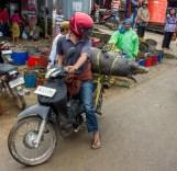 Pig transport Torajan style