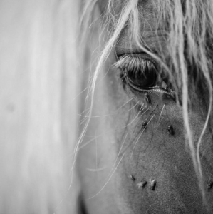 P 19 SI – 04 – Fed Horses – Ti ne poznaš konjev