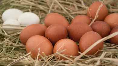 Photo of Precio del huevo sube 17% en el año; su mayor aumento en 7 años