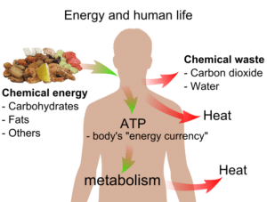 Chemical Energy in Daily Life