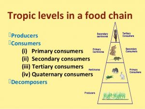 Types of food chains: