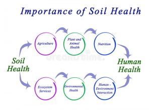 The importance of the soil ecosystem