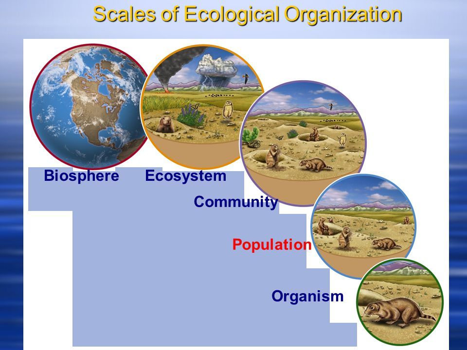 Pros And Cons Of Fossil Fuels >> Biosphere. Ecosystem. Community. Population. Organism ...