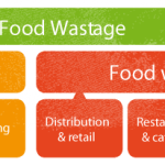 What are Food Losses and food waste