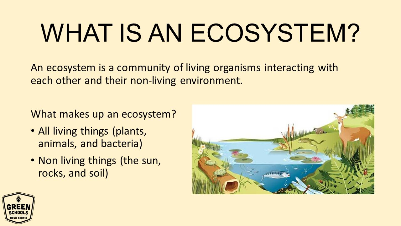 what are all of the ecosystems