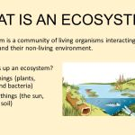 What is ecosystem