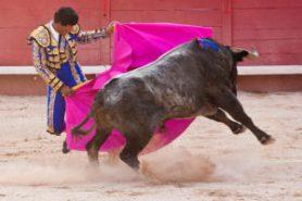 La course landaise et la corrida espagnole