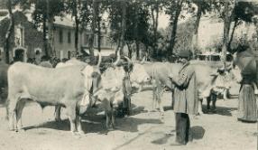 Marché des bestiaux dans le Landes et les vieux méties