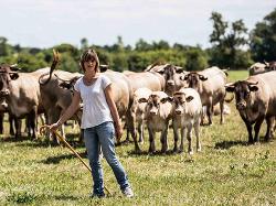 Vache bazadaise