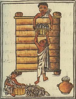 Ensilage du maïs par les aztèques, Codex de Florence, fin XVIe siècle Wikipédia