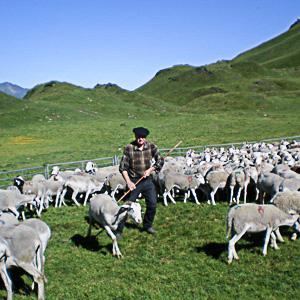 Pastoralisme à l'Hospice de France