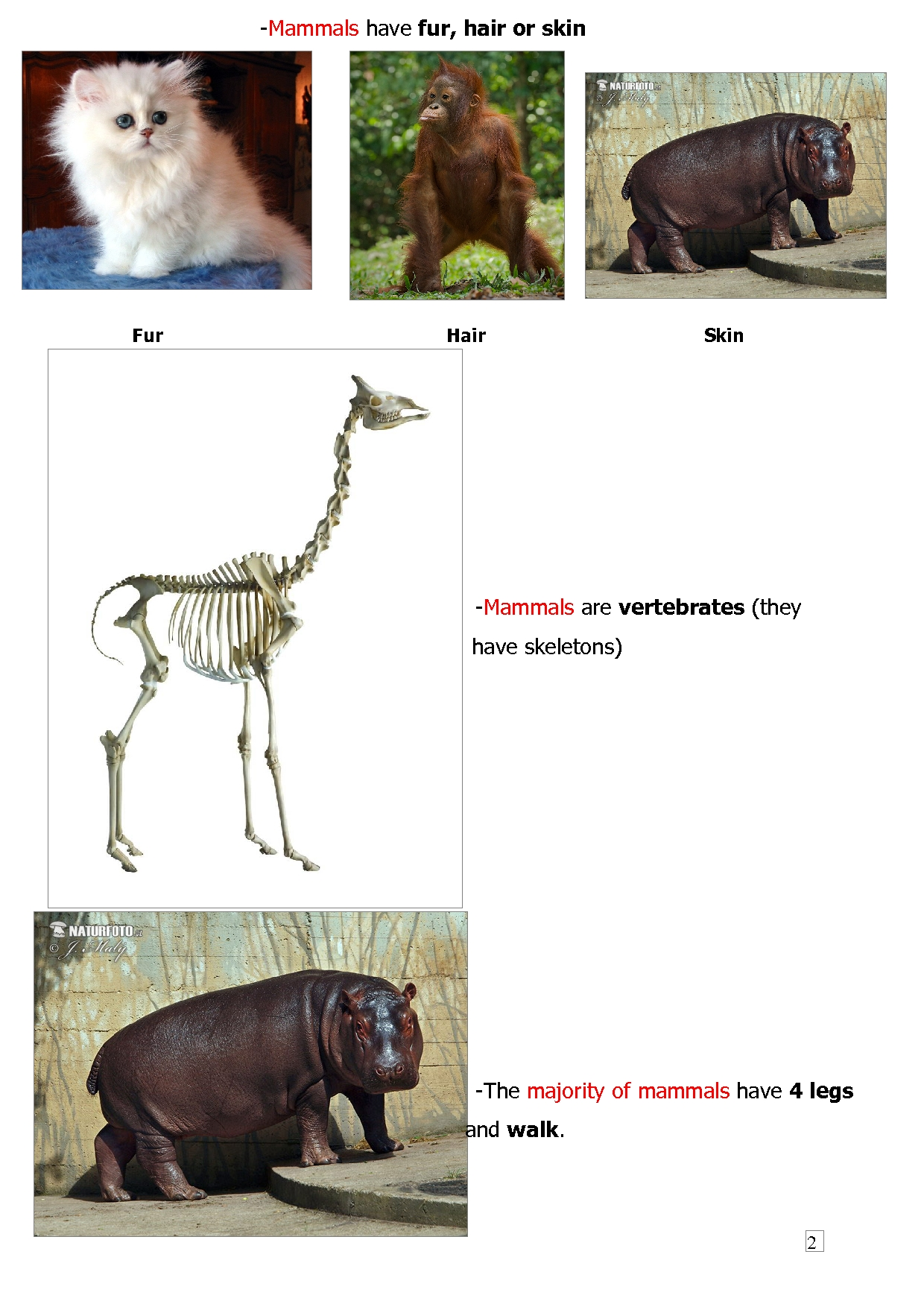 Classification Of Animals Wild Animals And Pets
