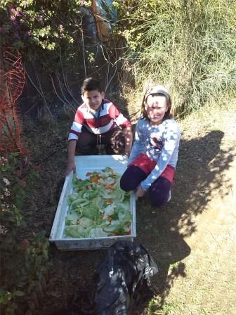 Comencem a donar menjar a les gallines