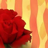 Feliç dia de Sant Jordi