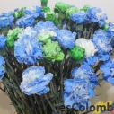Las flores frescas colombianas 28