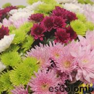 Las flores frescas colombianas 3