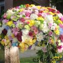 Las flores frescas colombianas 7