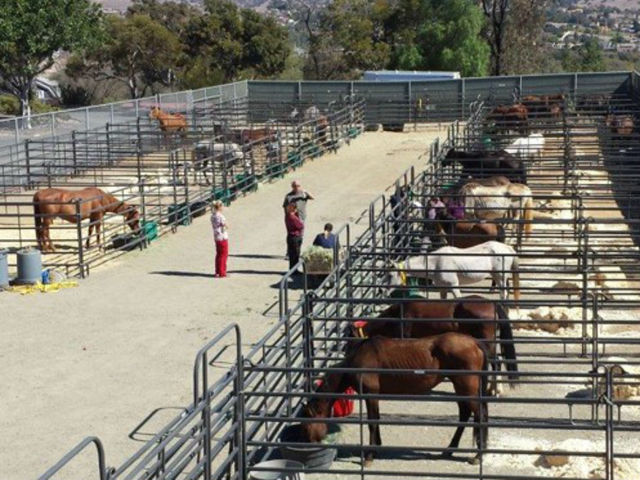 Horses taken from a Valley Center ranch and kept by Animal Control at Bonita.