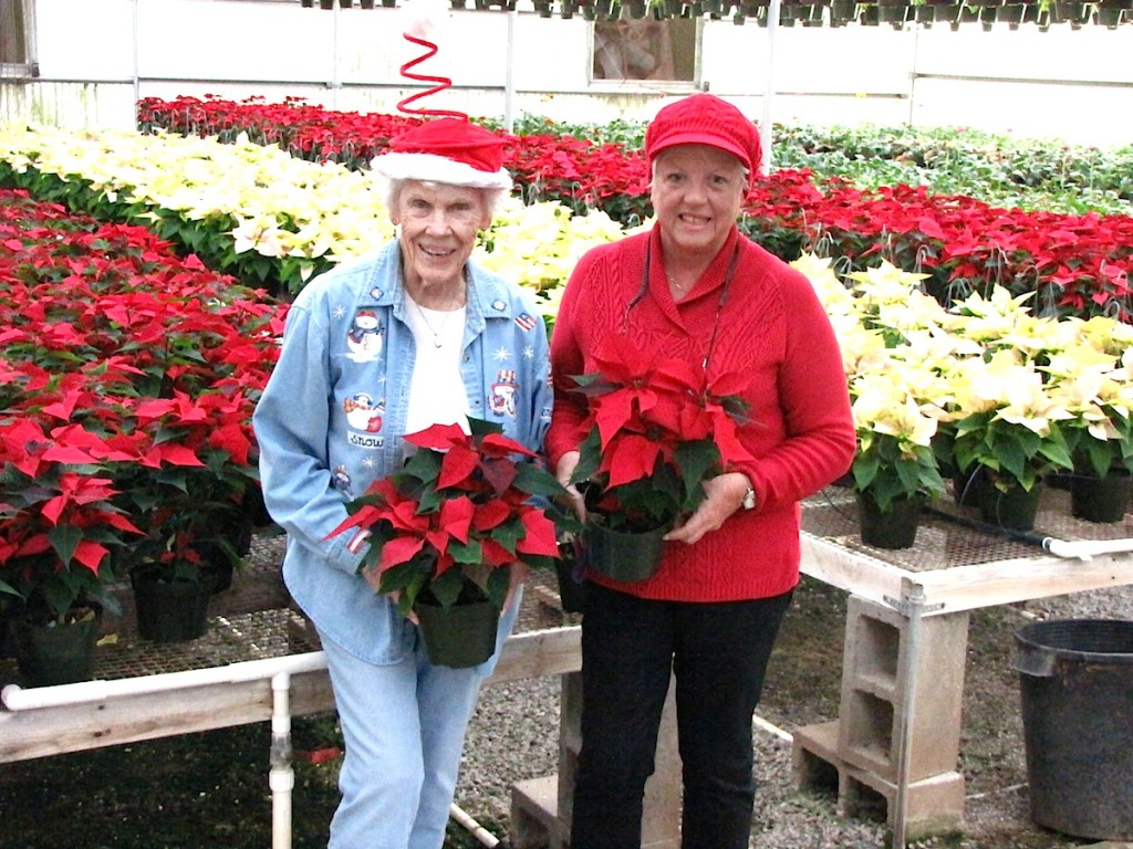 Dos Valles does poinsettias.