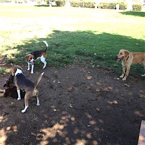 Hanging around the dog park.