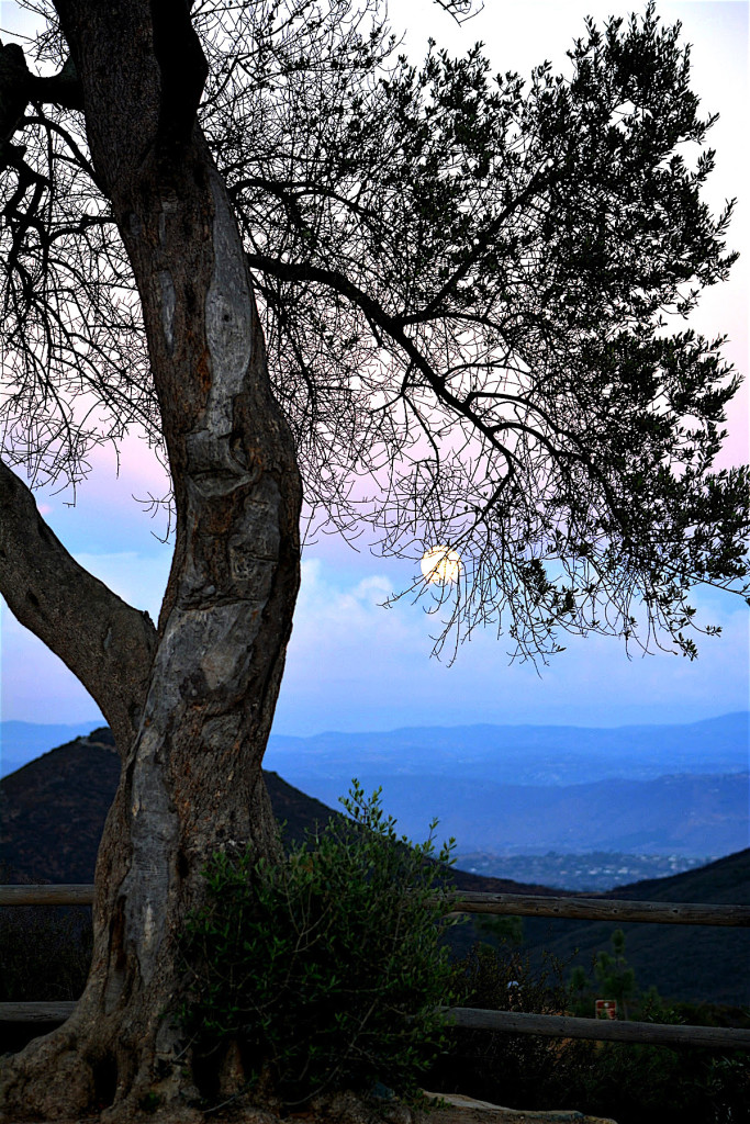 "Honorable mention - ""Blue Moon over Double Peak"" by Laura Quarantiello."