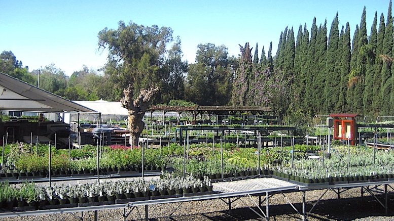 Herbs and spices thrive at Pearson's Gardens | Escondido Grapevine