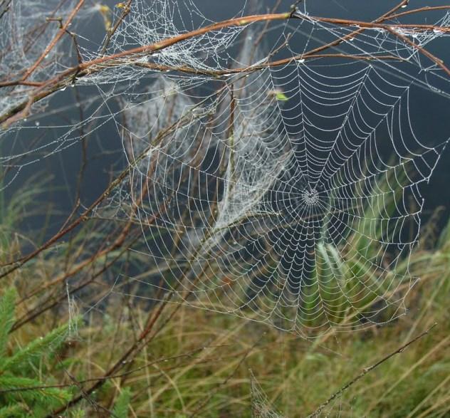 Teia da aranha