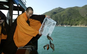"""Actividad Budista muy común en aquellos tiempos, la liberación de animales llamada """"hōjō"""""""