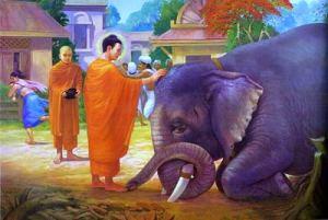 Buddha dirigiendo Metta