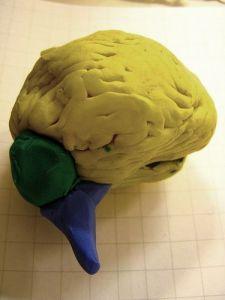 plastilina cerebral