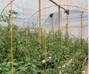 Vegetable Grow House