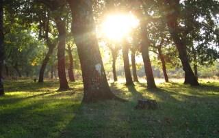 turismo de naturaleza, turismo en naturaleza, sierra de gata, bosque de robles, bosque de rebollos, bosque mediterráneo,