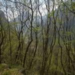 Attraverso il bosco il Lago del Mis