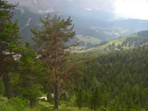 Panorama sulla Val Gardena