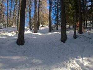 Fine del bosco