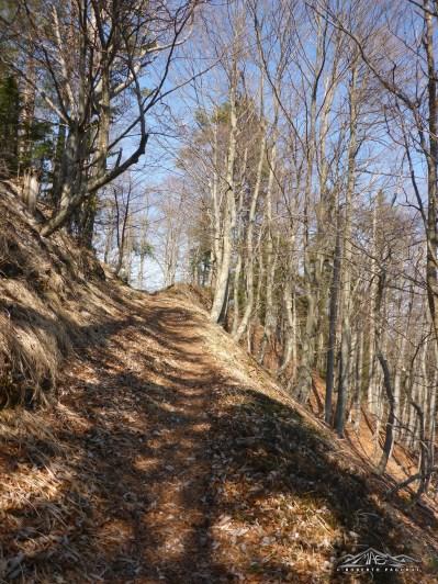 Al termine della strada militare, inizia quella boschiva.
